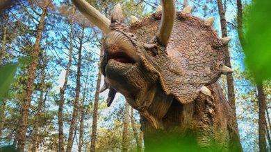 Photo of Media Sosial Di Gegerkan Dengan Dinosaurus Yang Turun Dari Truk, Ternyata Dibawa Kesini