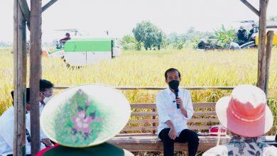 Photo of Jokowi Tinjau Panen Padi di Indramayu, Ajak Petani Berdialog