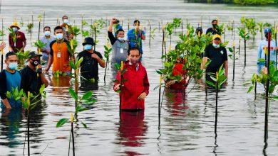 """Photo of Presiden """"Nyemplung"""" Saat Tanam Mangrove Bersama Masyarakat di Batam"""